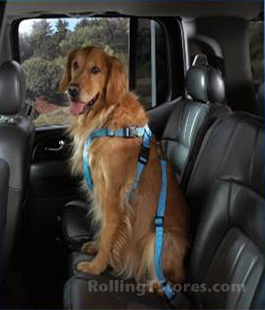 Cruising Campanion Baby Blue Harness
