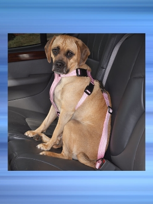Dog Car Harness W Seat Belt Pet Safety Blue Xsmall Travel
