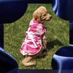 Dog Jacket Pink