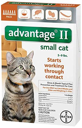 bayer-advantage-cats