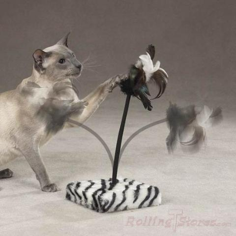 Savvy Tabby Jungle Jabber Zebra Cat Toy