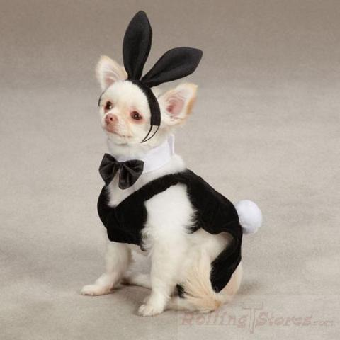 Party Hound Bunny