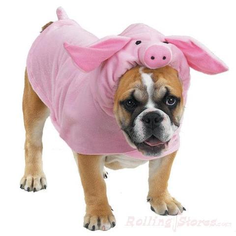 Piggy Pooch Pink