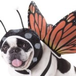Halloween Dog Costume Butterfly
