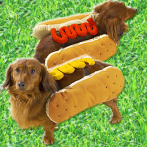 Hot Diggity Dog Halloween Costumes