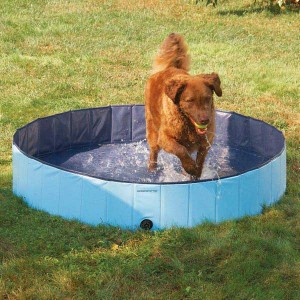 Dog Pool For Medium Dogs