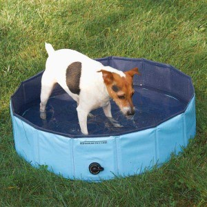 Dog Pool for Small Dogs