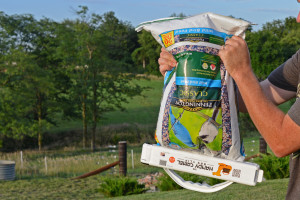 Handy Camel with Bird Seed